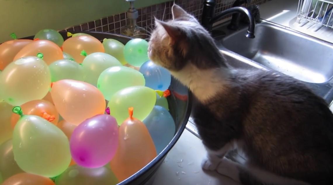 """Virales Video """"Katze lässt Wasserbomben platzen"""""""