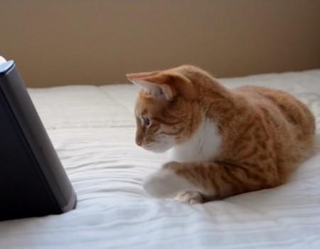"""Virale Idee """"Musik für Katzen erhält einen Kickstart von etwa 200.000 US-Dollar"""""""