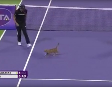 """Virales Video """"Katze stoppt Tennis Match"""" erreicht mehr als 1,8 Millionen Klicks"""