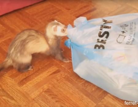 """Virales Video """"Frettchen bringen den Müll raus"""""""