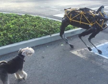 """Virales Video """"Google-Roboterhund trifft auf echten Hund"""" erreicht mehr als 1,1 Millionen Klicks"""