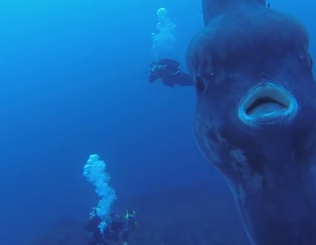 "Virales Video ""The ocean is f*cking terrifying"""