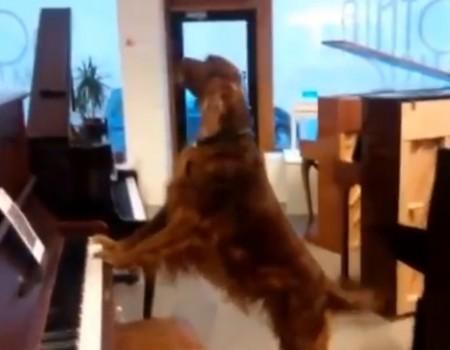 """Virales Video """"Musikalischer Hund"""""""