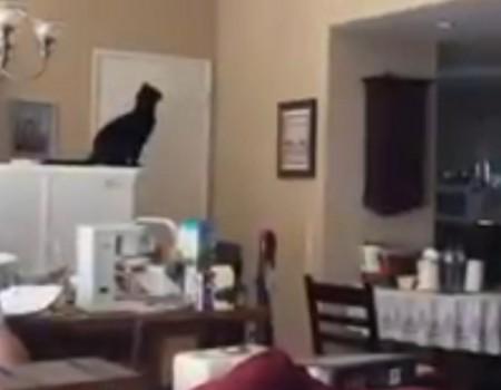 """Virales Video """"Nur einen Katzensprung entfernt"""""""