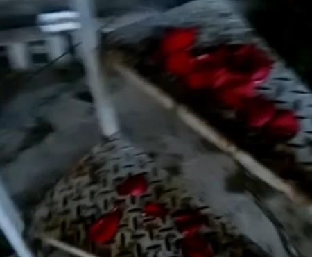 """Virales Video """"Ein romantischer Hundling"""""""