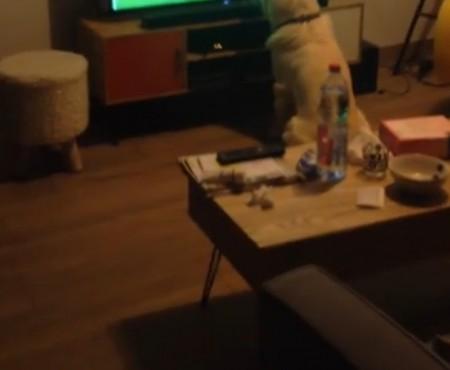 """Virales Video """"Tierischer Fußballfan"""""""