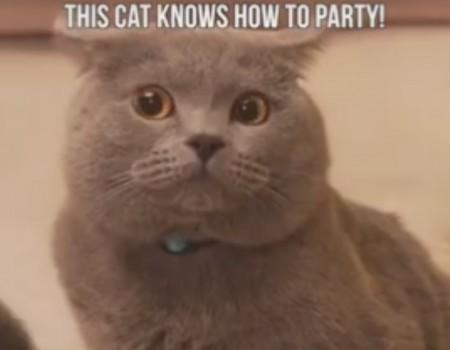 "Virales Video ""Katzen machen Schabernack"""