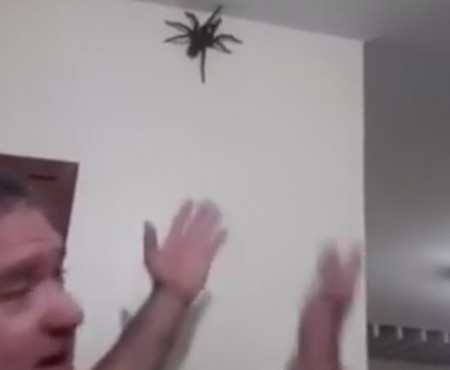 "Virales Video ""Wilde Spinne mal eben in der Wohnung"""