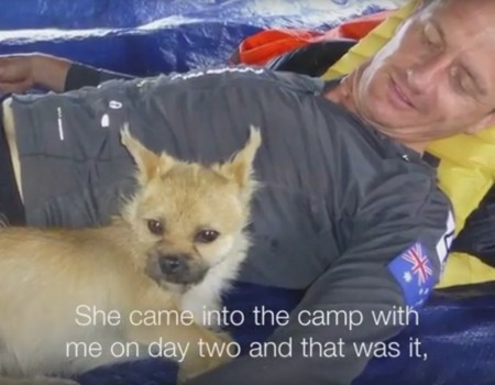 """Virales Video """"Streunender Hund folgt Extremläufer 125 Kilometer"""""""