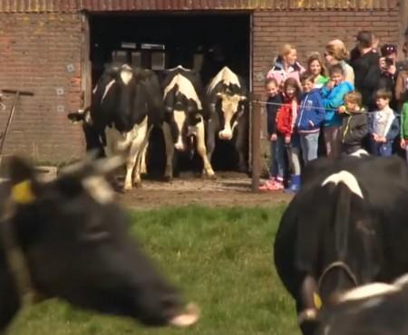 """Virales Video """"Glückliche Kühe"""""""