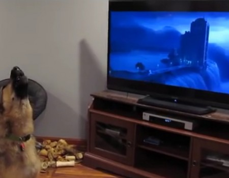 "Virales Video ""Kinderfilm Zootopia weckt in diesem Hund Urinstinkte"""
