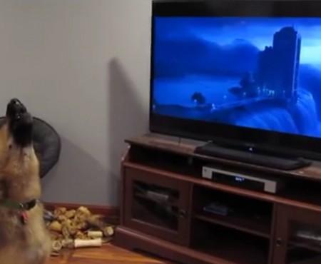 """Virales Video """"Kinderfilm Zootopia weckt in diesem Hund Urinstinkte"""""""