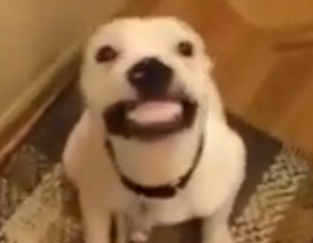 """Virales Video """"Say Cheese"""""""