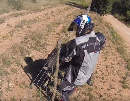 """Virales Video """"Oh Deer! – Reh wird von zwei Motorradfahrern gerettet"""""""
