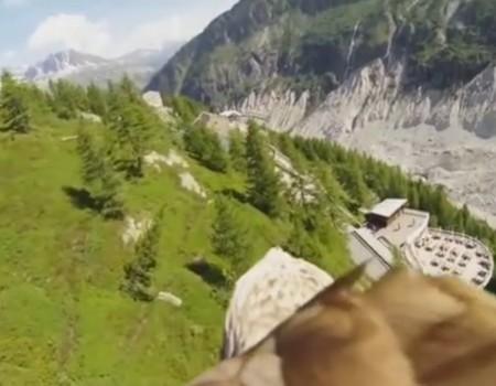 """Virales Video """"Mitfluggelegenheit eines Adlers"""""""