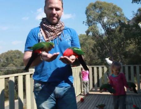 """Virales Video """"Wilde australische Papageien mit der Hand füttern"""""""