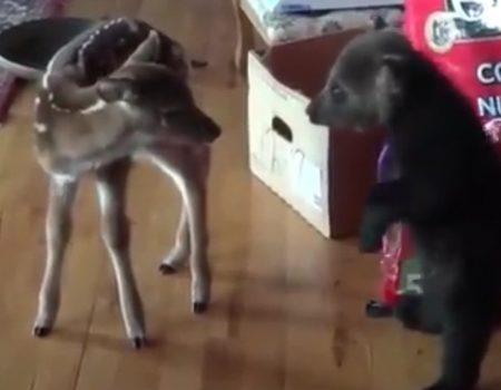 """Virales Video """"Ein kleiner Bär und ein Rehkids sagen sich Hallo"""""""