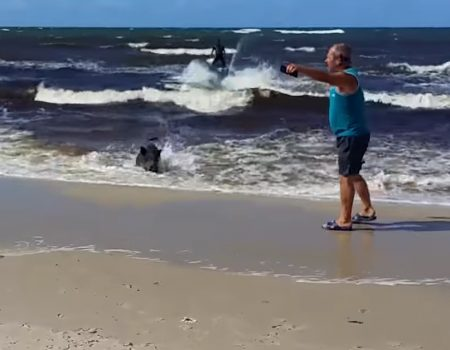 """Virales Video """"Buchstäblich ein Meerschweinchen"""""""