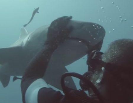 """Virales Video """"Mit Haien auf Tuchfühlung gehen"""""""
