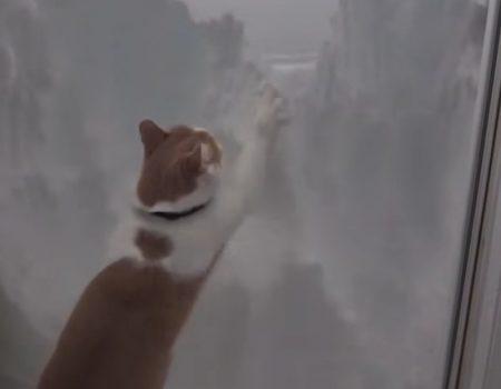 """Virales Video """"Katze Rüdiger ist auch bekannt als «Snow Patrol»"""""""