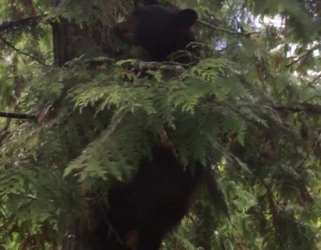 """Virales Video """"Junger athletischer Bär interessiert an ein wenig BBQ"""""""