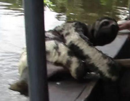 """Virales Video """"Urlauber bekommen ein wenig Gesellschaft beim Überqueren eines Flusses"""""""