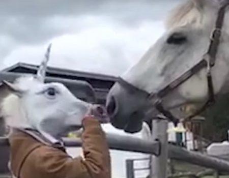 """Virales Video """"Pferd peinlich berührt nach tierischer Maskerade"""""""