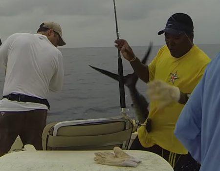 """Virales Video """"Segelfisch besucht drei Fischer bei ihrem Angelausflug und springt ins Boot"""""""