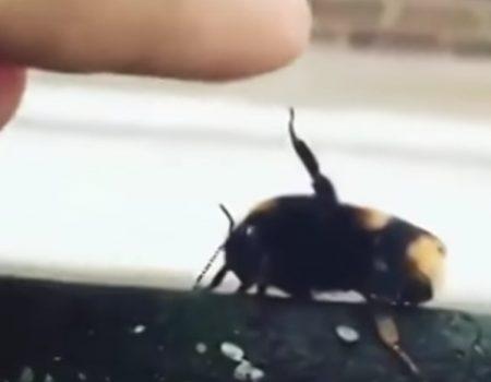 """Virales Video """"Biene gibt diesem Jungen im Garten ein echtes High-Five wie unter Freunden"""""""