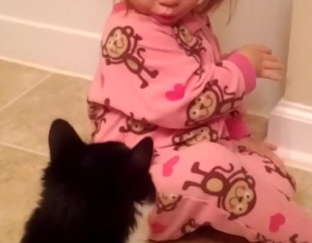 """Virales Video """"Katze mit Temperament zeigt diesem jungen Mädchen wer der Herr im Haus ist"""""""
