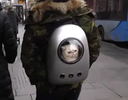 """Virales Video """"Katzen-Rucksack aka Catpack im Stadtzentrum von Nottingham im Einsatz"""""""