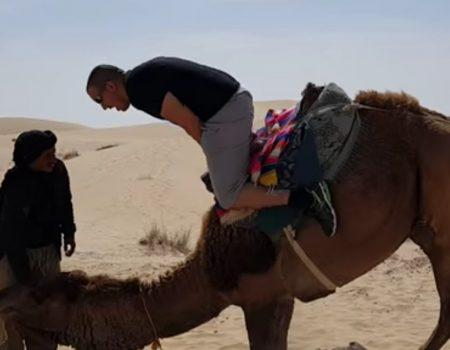 """Virales Video """"Mit dem Kopf voraus von einem Kamel absteigen kann in vielen Fällen auch schmerzhaft werden"""""""
