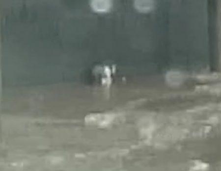"Virales Video ""Mann rettet junges Kätzchen bei Überschwemmungen in Tallinn, Estland"""
