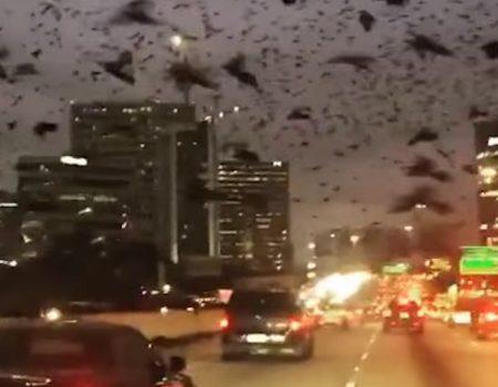 """Virales Video """"Zehntausende Vögel kreisen über der Stadt Houston und dem nahegelegenen Freeway"""""""