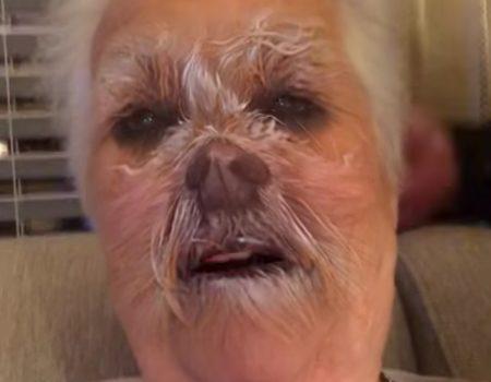 """Virales Video """"Snapchat-Filter Hundegesicht passt bei dieser älteren Dame wie die Faust aufs Auge"""""""