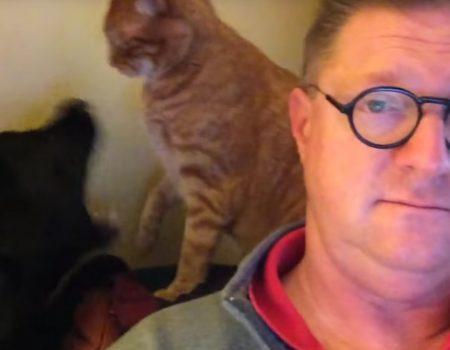 """Virales Video """"Zeitunglesen war offenbar alles was dieser Hunde- und Katzenbesitzer an diesem Sonntagmorgen wollte"""""""