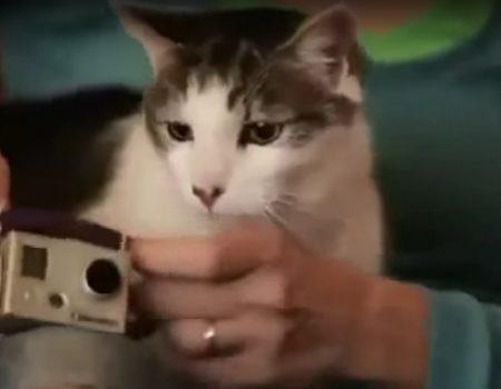 """Virales Video """"Ein ganz normaler Tag im Leben einer Katze gefilmt mit einer GoPro-Kamera"""""""