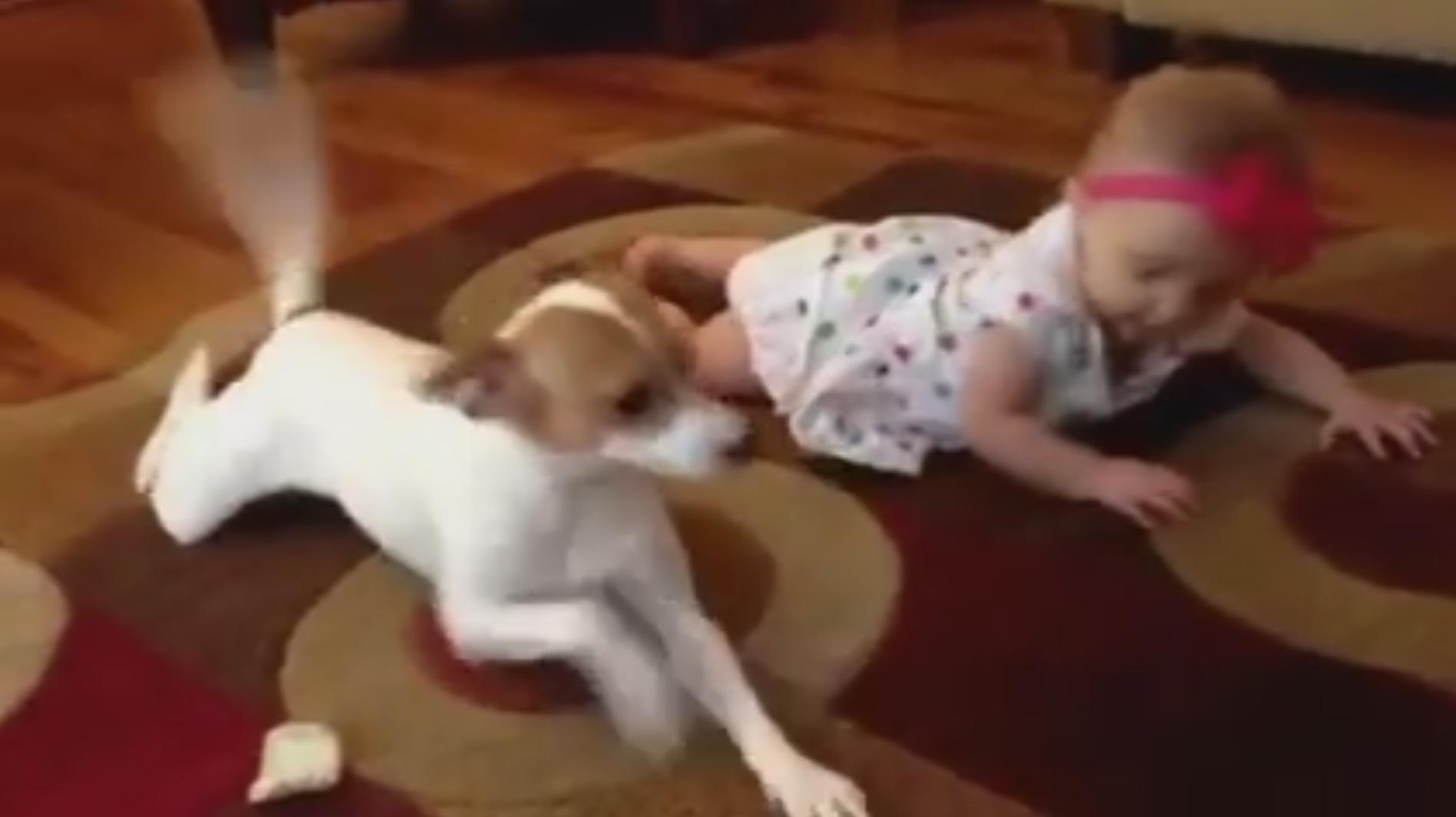 """""""hund krabbelt mit einem baby"""" viral film movie"""