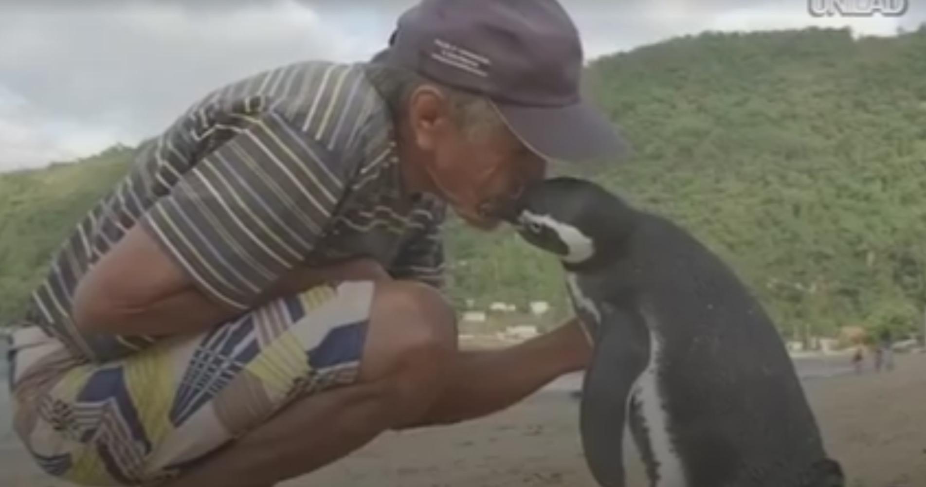 """virales video """"freundschaft zwischen mensch und pinguin"""""""