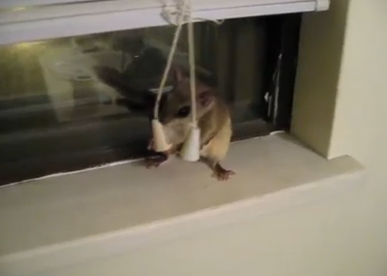 flughörnchen haustier