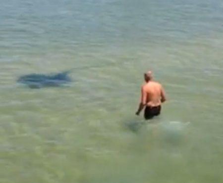 """Virales Video """"Älterer Mann ärgert an der Gold Coast in Australien einen Stachelrochen – der rächt sich sofort mit einem Angriff"""""""