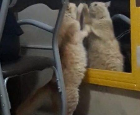 "Virales Video ""Rote Katze aus Uruguaiana, Rio Grande do Sul, Brasilien kämpft minutenlang gegen Windmühlen"""