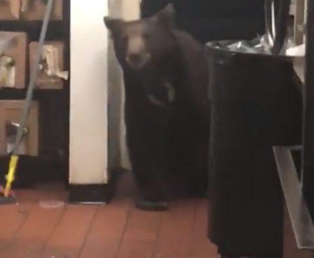 """Virales Video """"Ein ausgewachsener Bär stattet in Incline Village in Amerika Restaurant-Köchen einen Besuch in der Küche ab"""""""