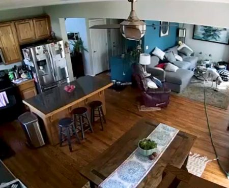"""Virales Video """"Französischer Boxer verwandelt das Haus seines Herrchens in Brighton, Colorado in Amerika mit einem Gartenschlauch in einen echten Wasserpark"""""""