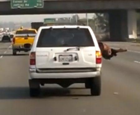 """Virales Video """"Verrückter Beifahrer hängt sich auf dem Freeway in Südkalifornien kopfüber aus einem Geländewagen und bringt sich in Lebensgefahr"""""""