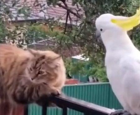 """Virales Video """"Wilder Kakadu und Streuner sind über Jahre die besten Freunde geworden und hängen oft zusammen ab"""""""