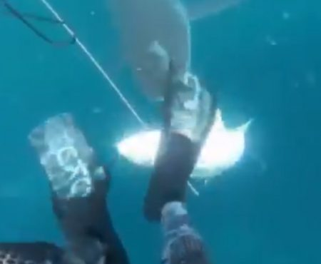 """Virales Video """"Junger Mann aus Neuseeland wird während seines Speerfisch-Ausflugs von einem hungrigen Hai gestört"""""""
